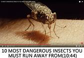 王衡:10.10 MOST DANGEROUS INSECTS YOU MUST RUN AWAY FROM(10-44).jpg
