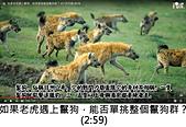 王衡:10.如果老虎遇上鬣狗,能否單挑整個鬣狗群?(2-59).jpg