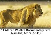 王衡:2.5K African Wildlife Documentary Film - Etosha National Park, Namibia, Africa(27-31).jpg