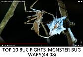 王衡:9.TOP 10 BUG FIGHTS_MONSTER BUG WARS(44-08).jpg