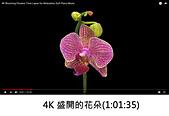 王衡:1.4K 盛開的花朵(4-20).jpg