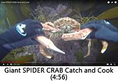 王衡:15.Giant SPIDER CRAB Catch and Cook(4-56).jpg