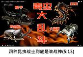 王衡:2.四种昆虫战士到底是谁战神(5-13).jpg