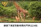 王衡:9.鏡頭下捕捉到動物間的鬥爭(12-40).jpg