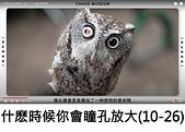 王衡:什麽時候你會瞳孔放大?混亂博物館.jpg