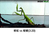 王衡:4.蜈蚣 vs 螳螂(3-20).jpg