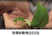 王衡:10.狡猾的動物(10-23).jpg