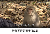 王衡:3.脾氣不好的猴子(3-15).jpg