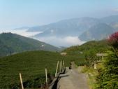 碧湖風景:DSCI0540.JPG