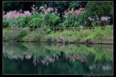 桃園市大溪區落雨松濕地(3顆星):_B8A5349.JPG