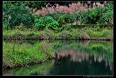 桃園市大溪區落雨松濕地(3顆星):_B8A5352.JPG
