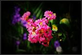 (其它花種) :