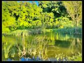 桃園市大溪區月眉人工濕地生態公園(3顆星):1101 022.JPG