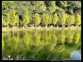 桃園市大溪區月眉人工濕地生態公園(3顆星):1101 026.JPG