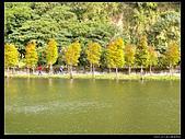 桃園市大溪區月眉人工濕地生態公園(3顆星):1129 178.JPG