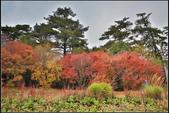 台中市和平區 福壽山農場(4顆星):
