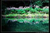 桃園市大溪區落雨松濕地(3顆星):_B8A5341.JPG
