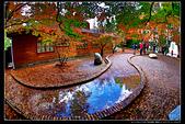 台中市和平區 福壽山農場(4顆星):_B8A6122.JPG