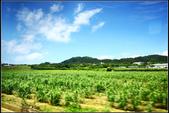 (日本石垣島隨拍(5顆星):石垣観光パイン・マンゴー園