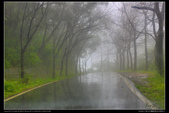 新北市鶯歌區 大凍山百年榕樹(3顆星):TB8A3592.JPG