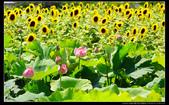桃園市觀音區向陽農場(2顆星):