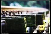 苗栗縣三義鄉 內社川鐵橋 隧道(4顆星):TB8A1990.JPG
