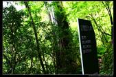 桃園市復興區拉拉山(達觀山)自然保護區(4顆星):