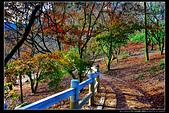 台中市和平區 福壽山農場(4顆星):_B8A6166.JPG