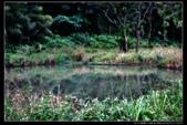 桃園市大溪區落雨松濕地(3顆星):_B8A5336.JPG