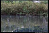 桃園市大溪區落雨松濕地(3顆星):_B8A5363.JPG