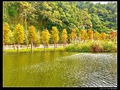 桃園市大溪區月眉人工濕地生態公園(3顆星):1129 176.JPG