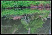 桃園市大溪區落雨松濕地(3顆星):_B8A5372.JPG