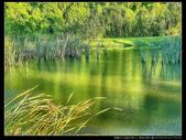 桃園市大溪區月眉人工濕地生態公園(3顆星):1101 024.JPG