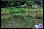 桃園市大溪區落雨松濕地(3顆星):_B8A5373.JPG