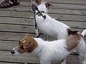 照片:在granville island 拍到的路狗