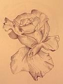 畫作~♡:玫瑰