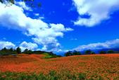 赤柯山+六十石山+太麻里的金針花田2013:2U4A2735.JPG