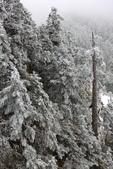 2015.2.10合歡山公路雪景:2U4A8184.JPG