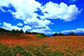 赤柯山+六十石山+太麻里的金針花田2013:2U4A2725.JPG