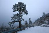 2015.2.10合歡山公路雪景:2U4A8169.JPG
