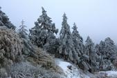 2015.2.10合歡山公路雪景:2U4A8167.JPG