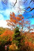 太平山莊~翠峰湖~山毛櫸步道~見晴懷古步道:2U4A4365.JPG