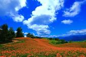 赤柯山+六十石山+太麻里的金針花田2013:2U4A2747.JPG