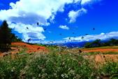 赤柯山+六十石山+太麻里的金針花田2013:2U4A2749.JPG