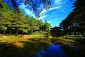福壽山貓兒菊~藍茵湖~天池達觀亭~露營區:2U4A0269.JPG