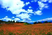赤柯山+六十石山+太麻里的金針花田2013:2U4A2732.JPG