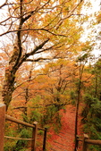 太平山莊~翠峰湖~山毛櫸步道~見晴懷古步道:2U4A4293.JPG