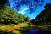 福壽山貓兒菊~藍茵湖~天池達觀亭~露營區:2U4A0270.JPG