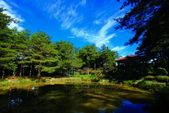 福壽山貓兒菊~藍茵湖~天池達觀亭~露營區:2U4A0272.JPG