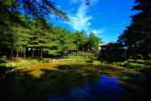 福壽山貓兒菊~藍茵湖~天池達觀亭~露營區:2U4A0276.JPG